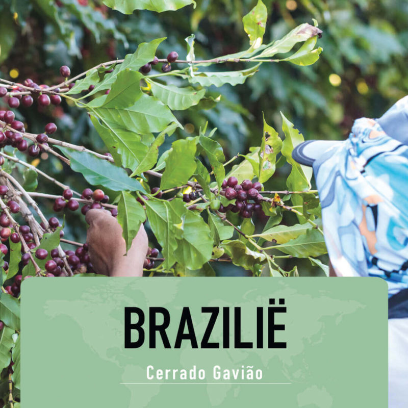Koffie Van De Maand Maart 2021: Brasil – Cerrado Gavião