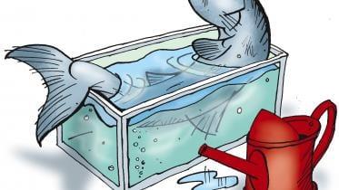 Spildevand & fiskeproduktion