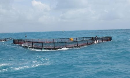 Fisk skal produceres i havet, foto: KIDM