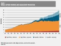 Fiskeri & Akvakultur, FAO 2020
