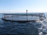 Havbrugsdebat på Folkemødet