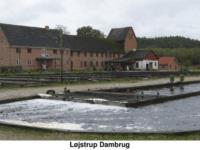 Løjstrup dambrug. Musholms anlæg til produktion af sættefisk til havbrug