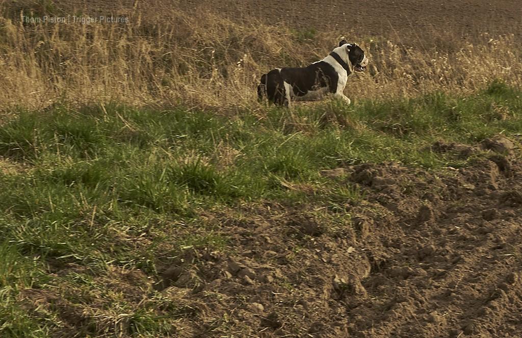 alwin- the olde british bulldog - nach dem anbaden..:)