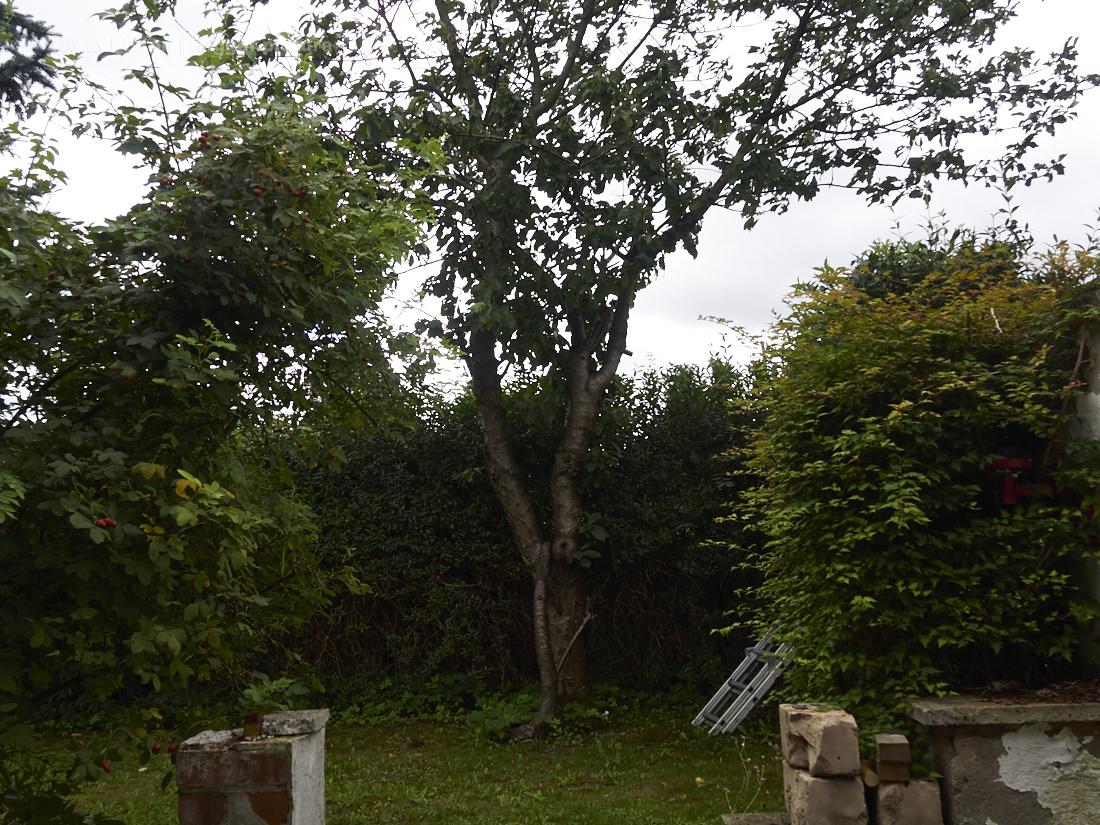 Kischbäume haben wir zuviel und zu trächtige,