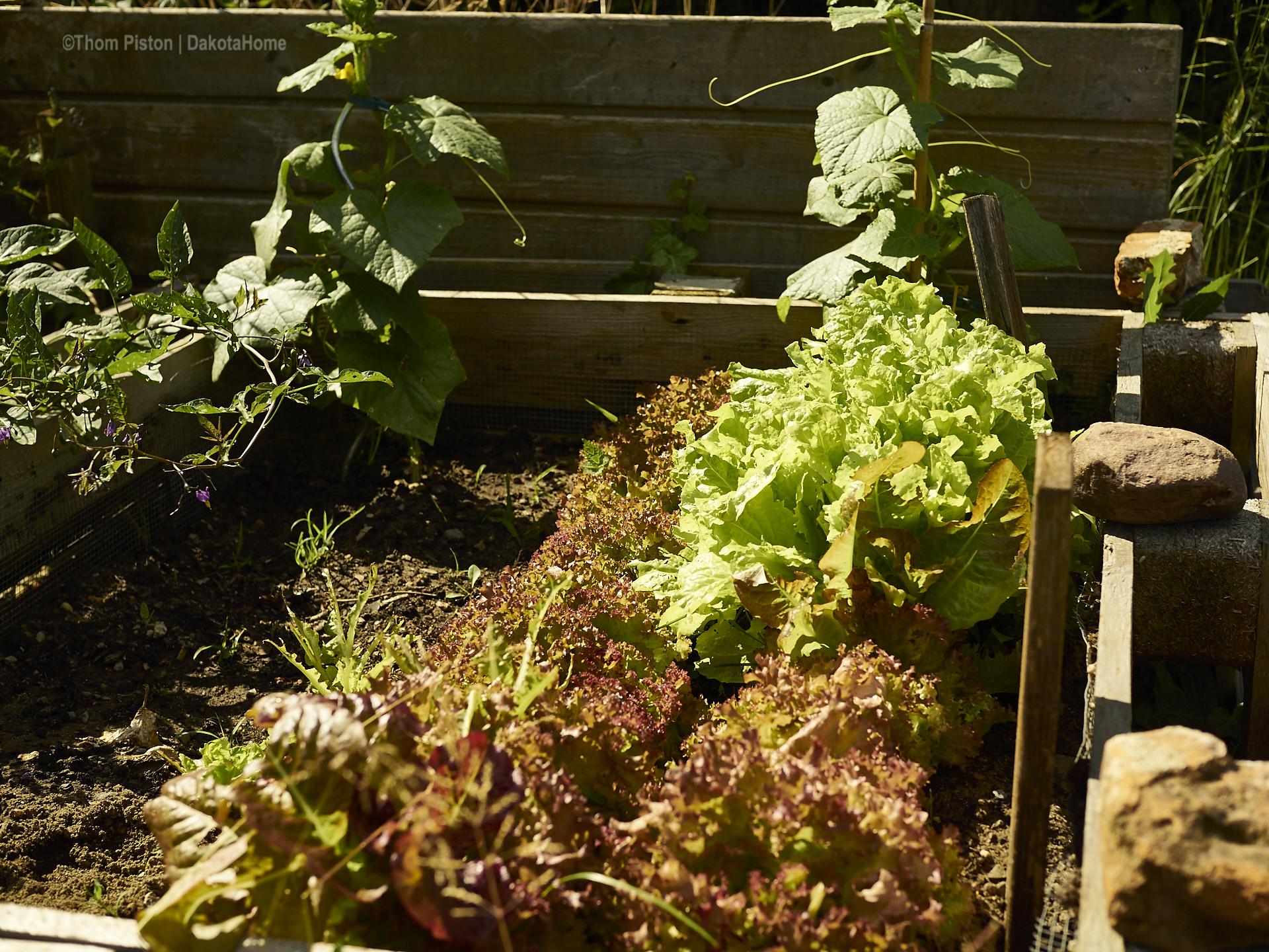 Salat und Gurken at Dakota Home