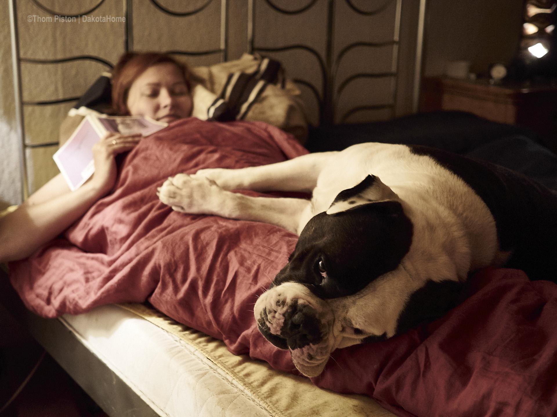 alwin the olde british bulldog die kaum bemerkbare elfe in seinem eckchen..