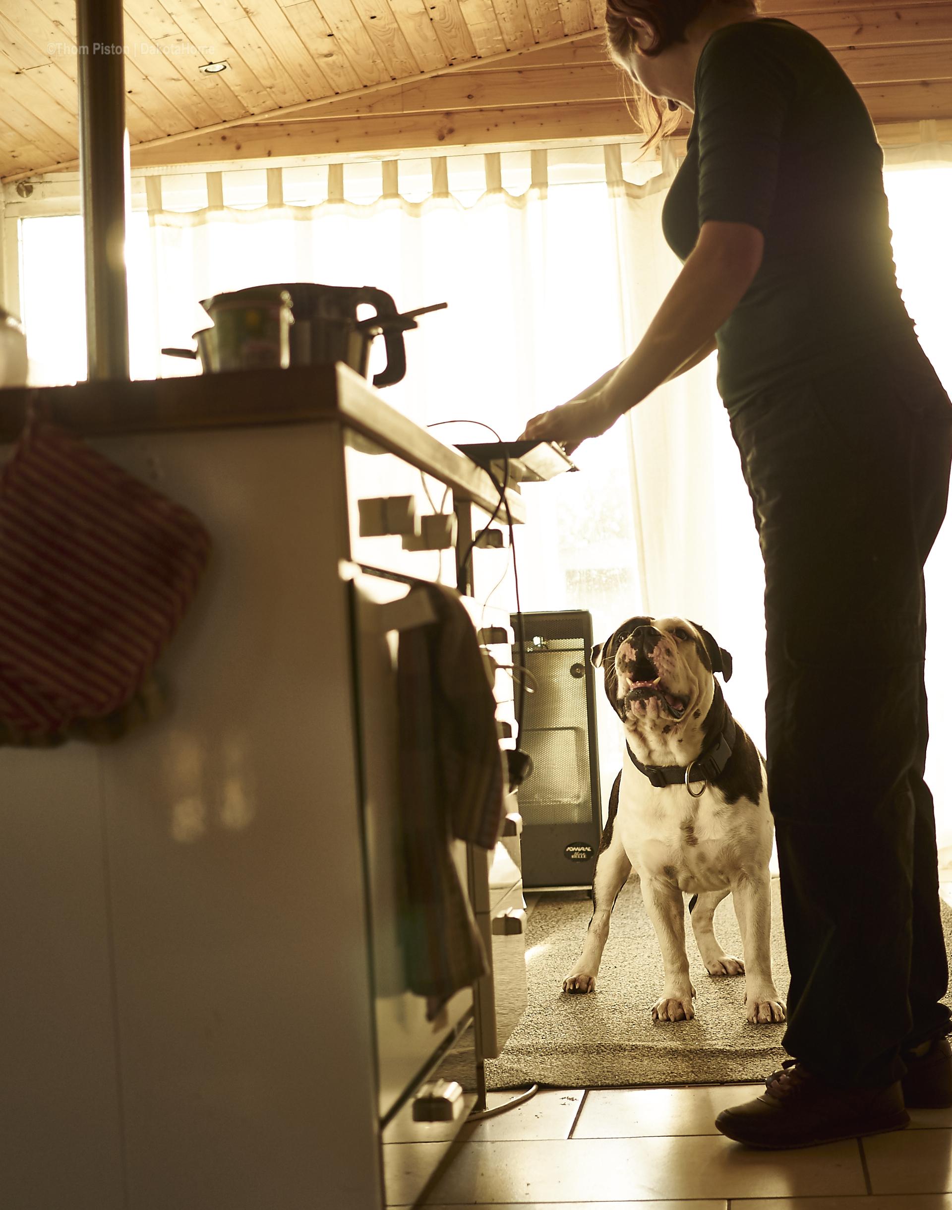 alwin the olde british bulldog muss genau wissen wie man was kocht..
