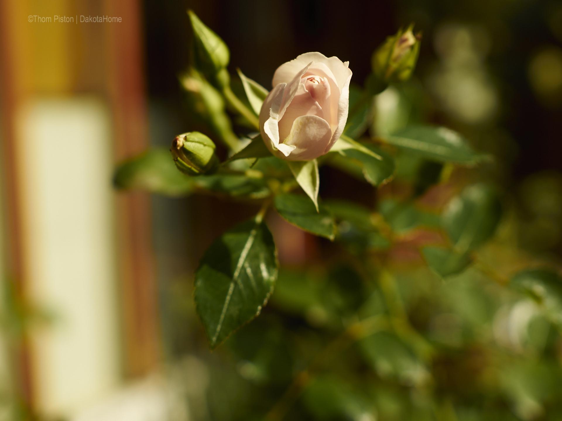 rosen at dakota home