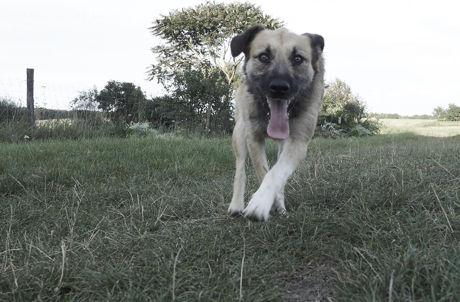 unsere Bulldogge mit Freundin Lea