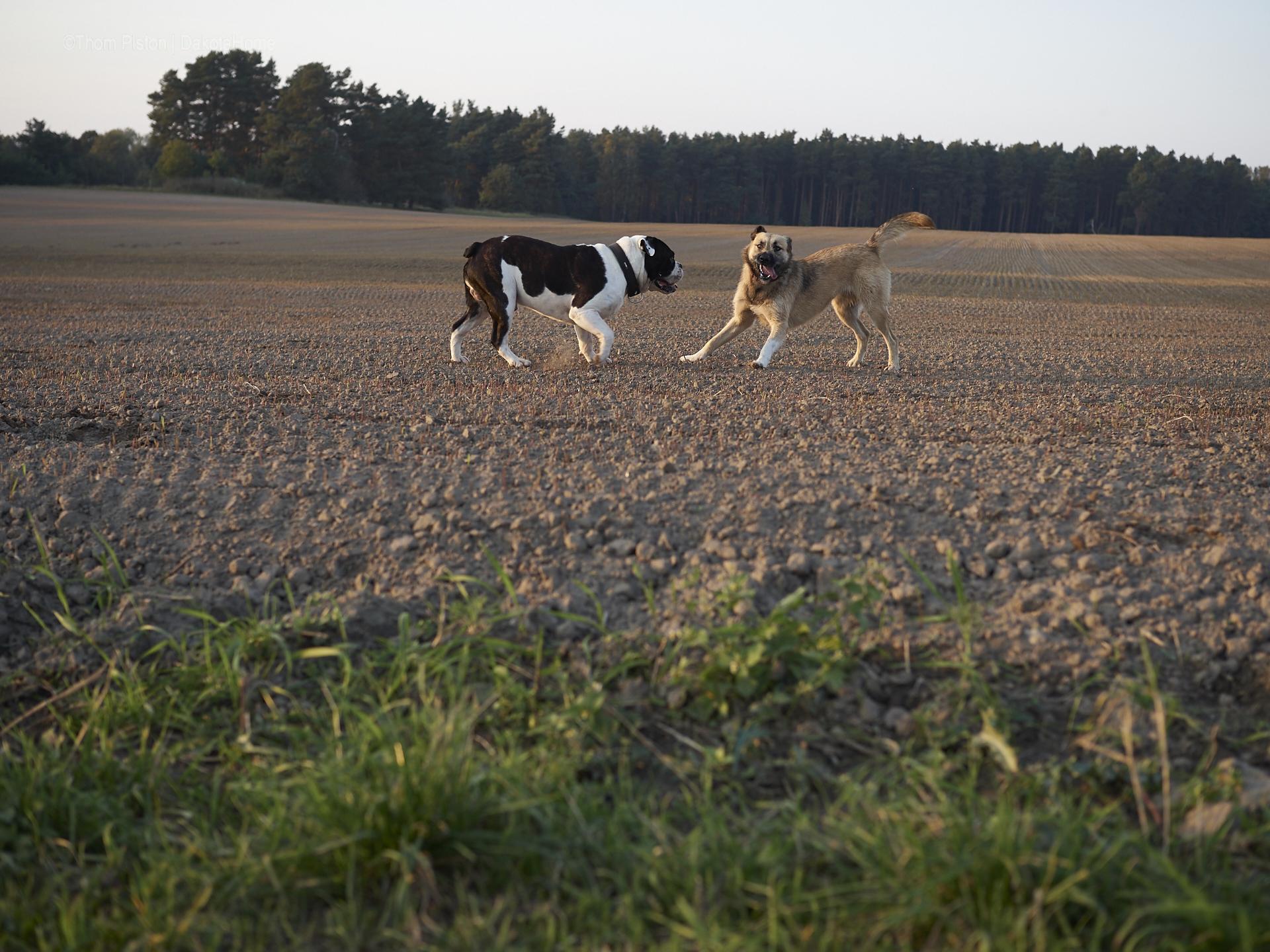 Pilze, Pool, Sonne, Kälte & die Bulldogge hat eine Herzdame