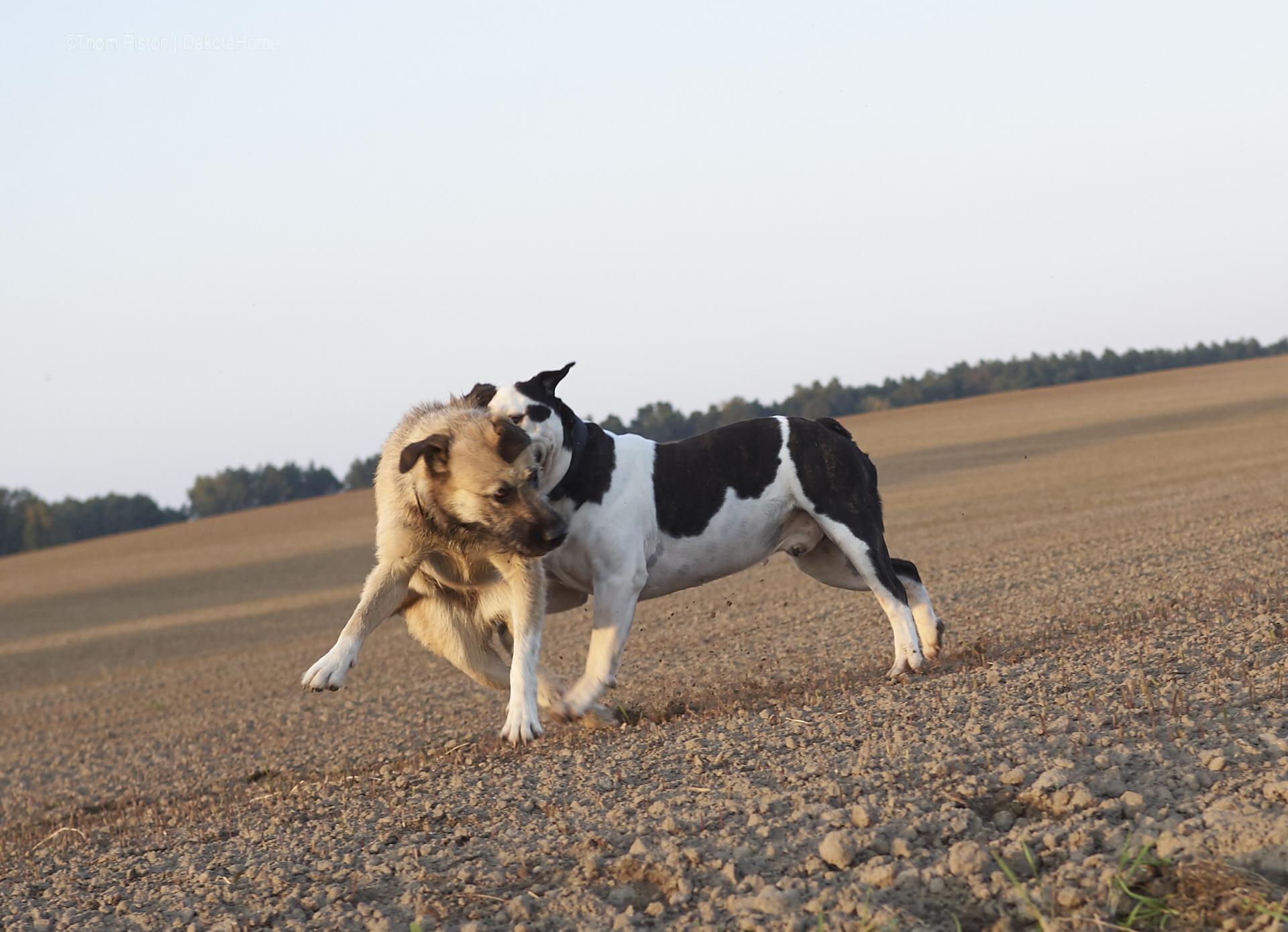 olympus, olympusomd, wildlifephotographie, animalphoto, naturfotografie,bulldoggen foto