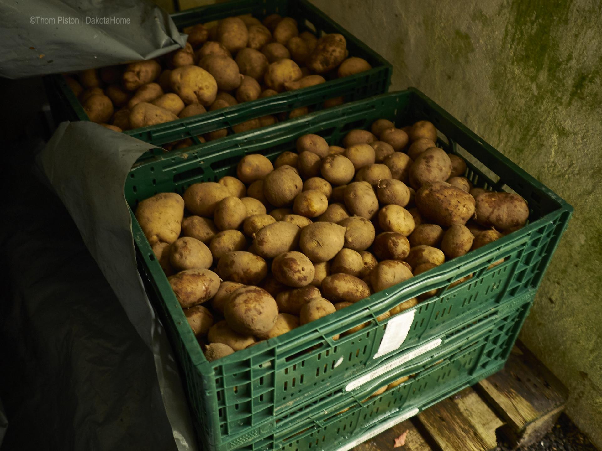 Kartoffel Adretta