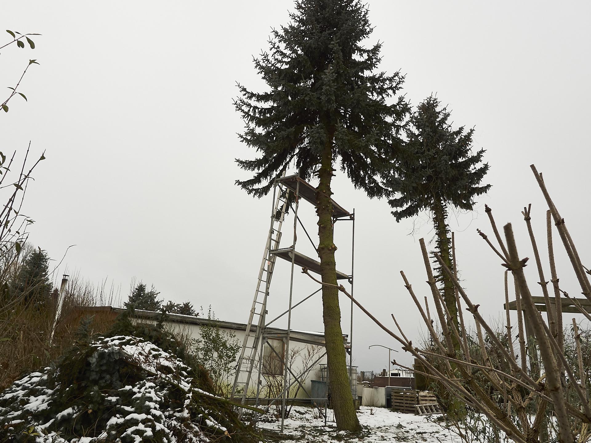 Baum einrüsten