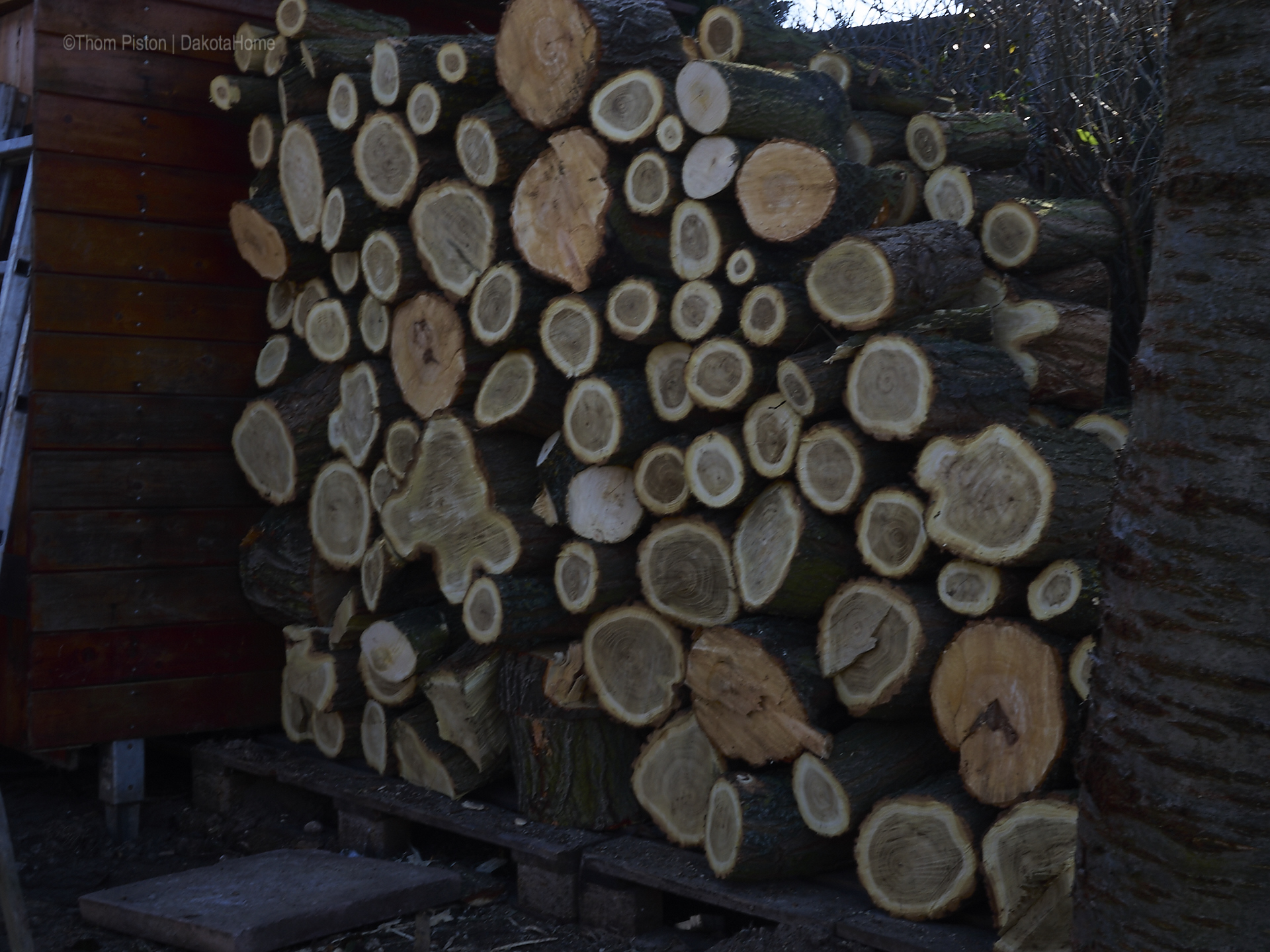 Holz at Dakota Home