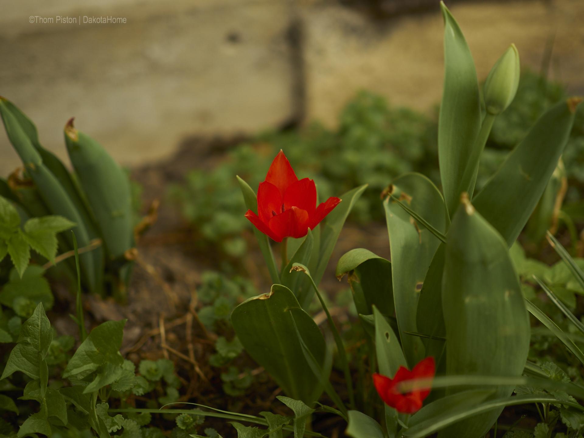 Blumen at Dakota Home