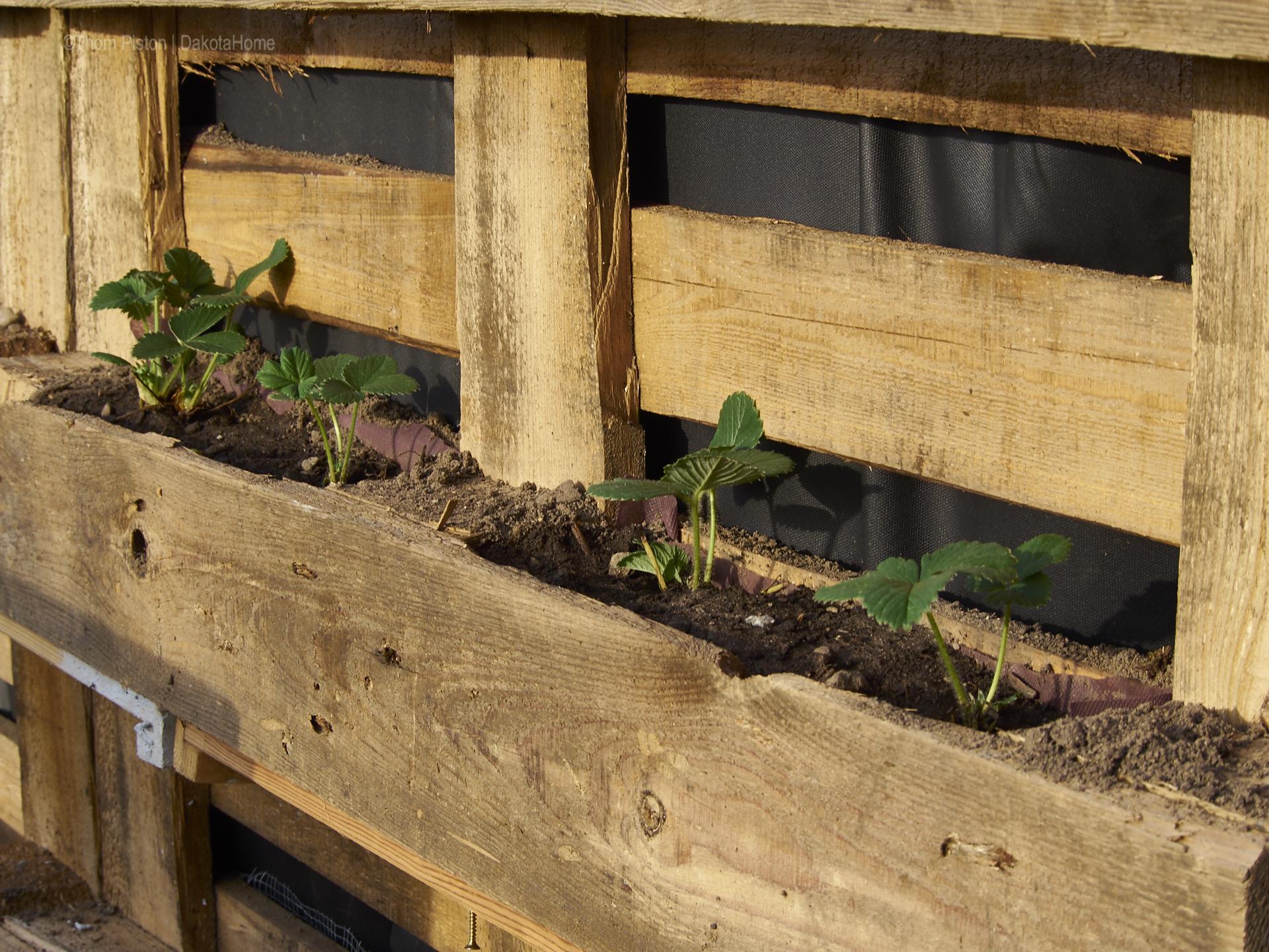 Aussenbepflanzung Hochbeet Ponderosa