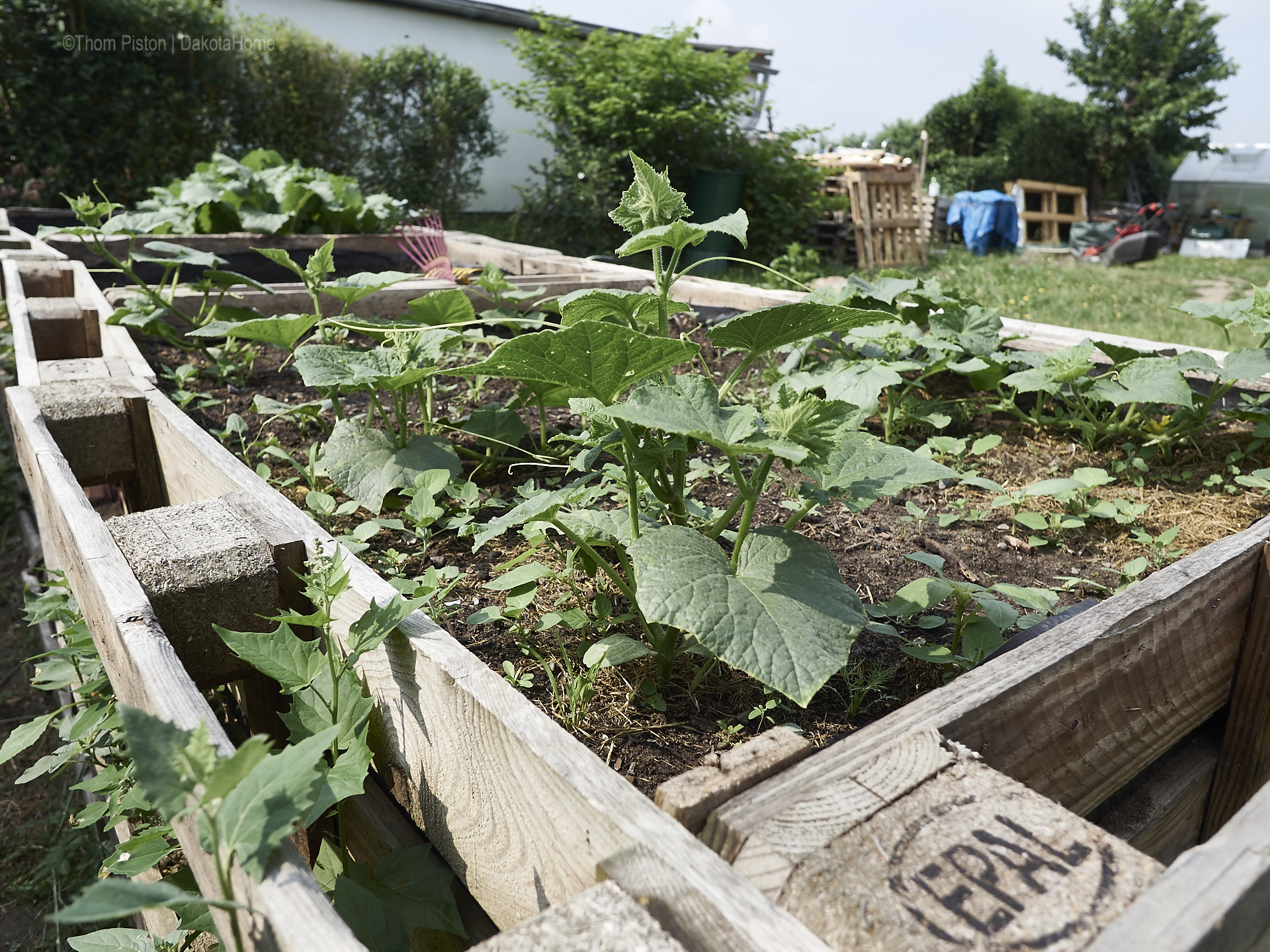 Unser kleiner Garten und was so darin wächst.. :)