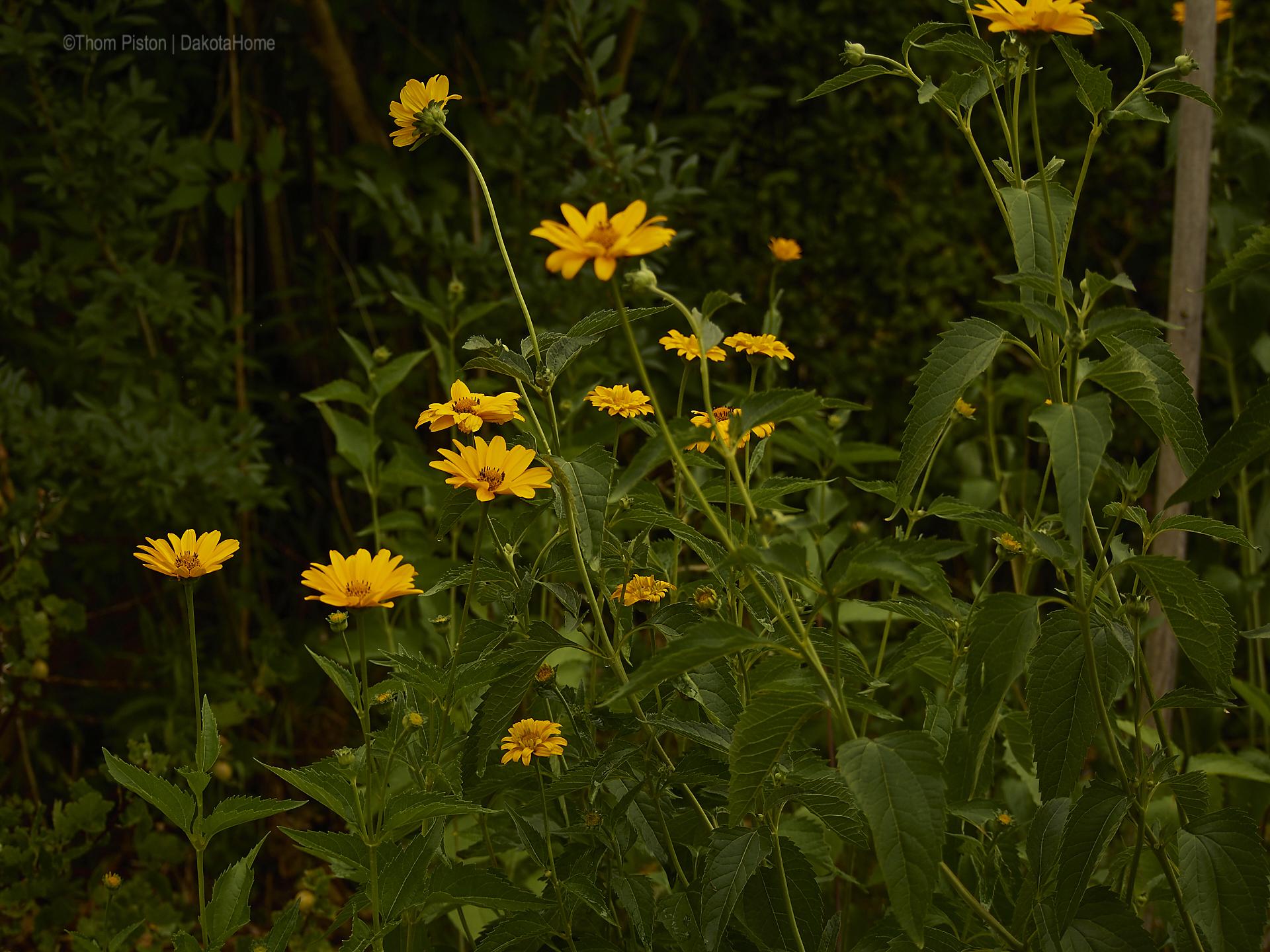 ...Blumen .., Mitte Juni 2018