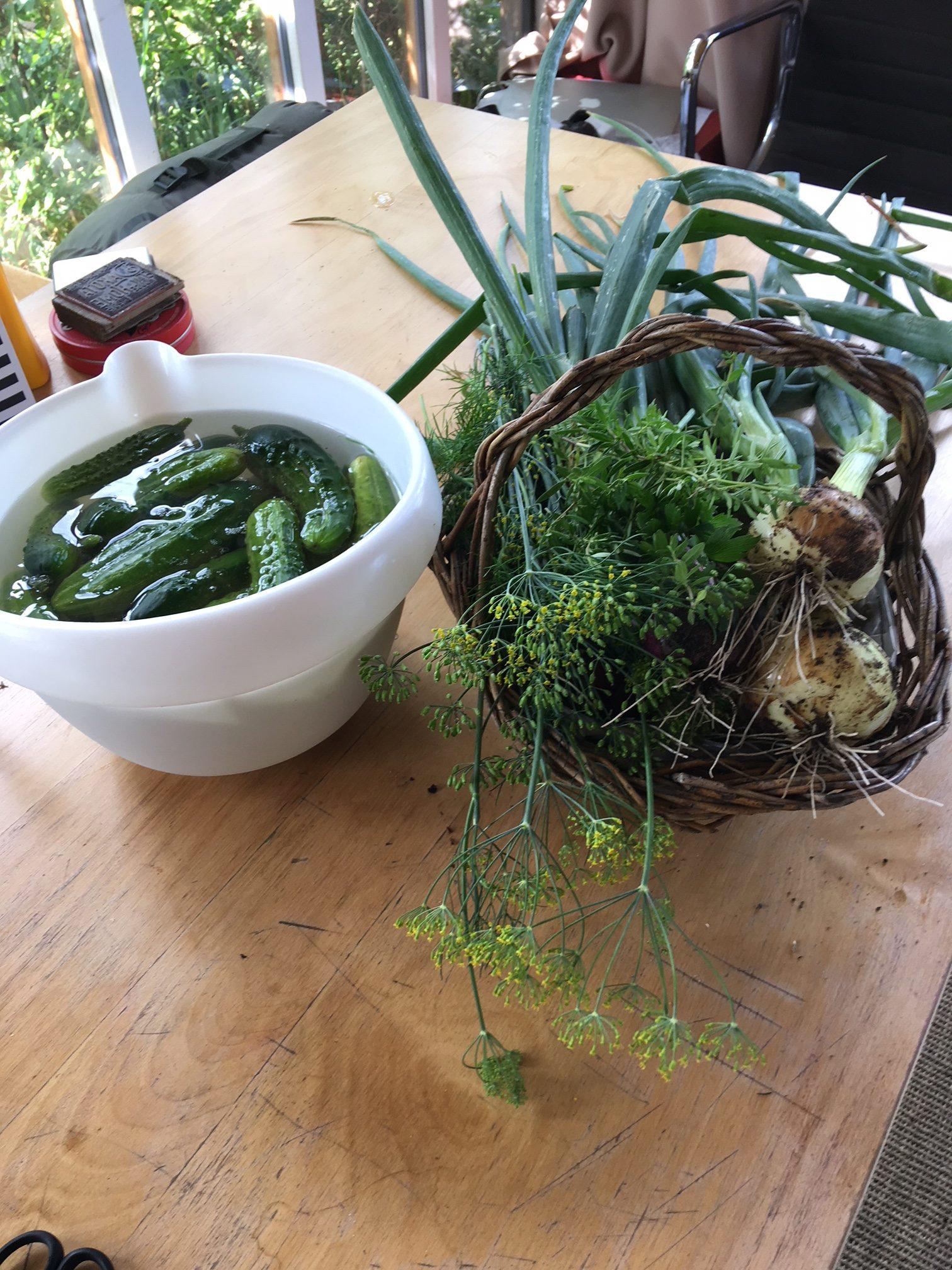 Dakota Home - Gurkentopf ansetzten mit Zeugs aus dem Garten