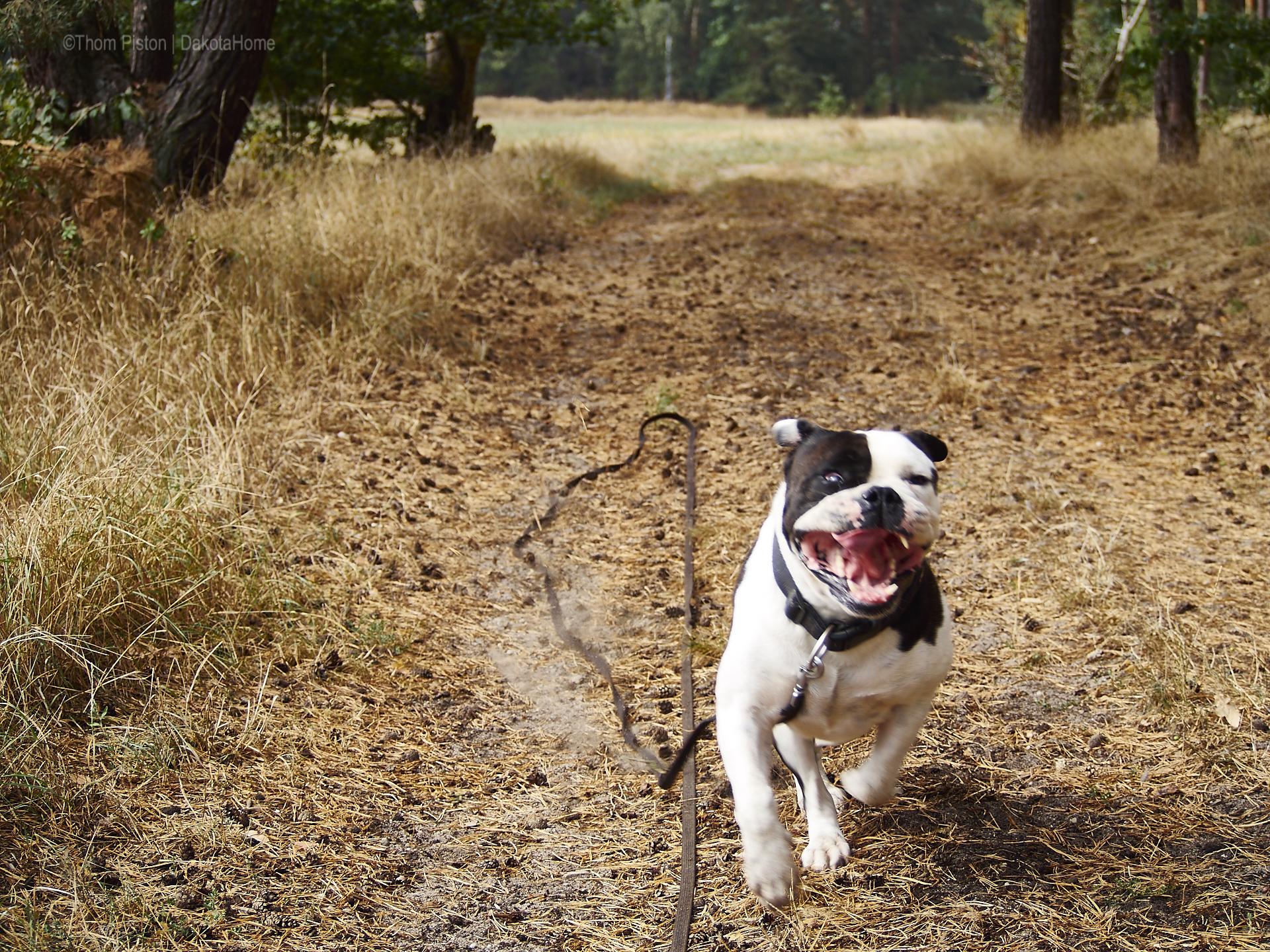 ...wenn man morgens döst und die bulldogge so ankommen sieht hat man 2 möglichkeiten...entwerder man lässt die leine los oder man wird wachgerüttelt...