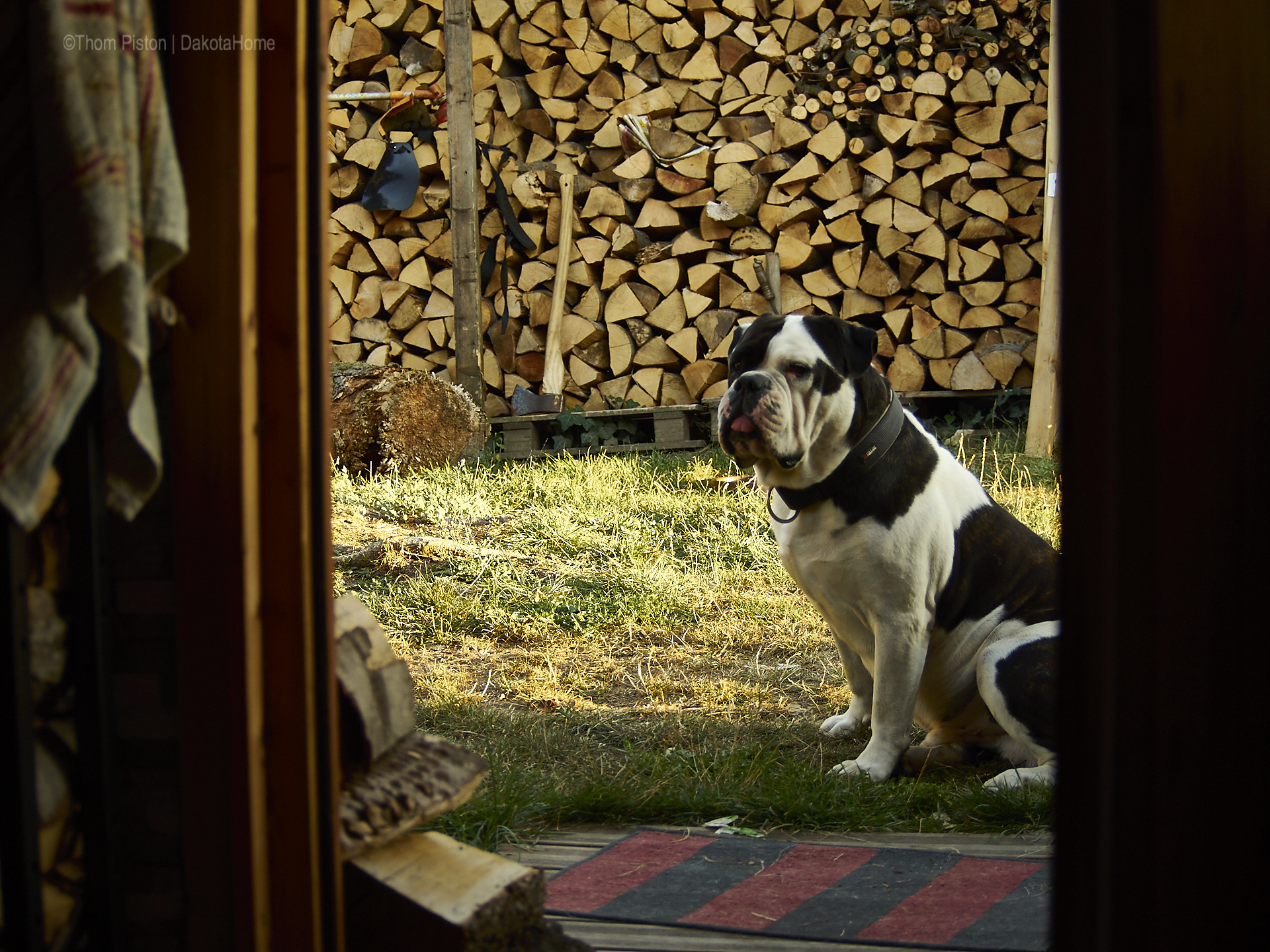Alwin..the Olde British Bulldog