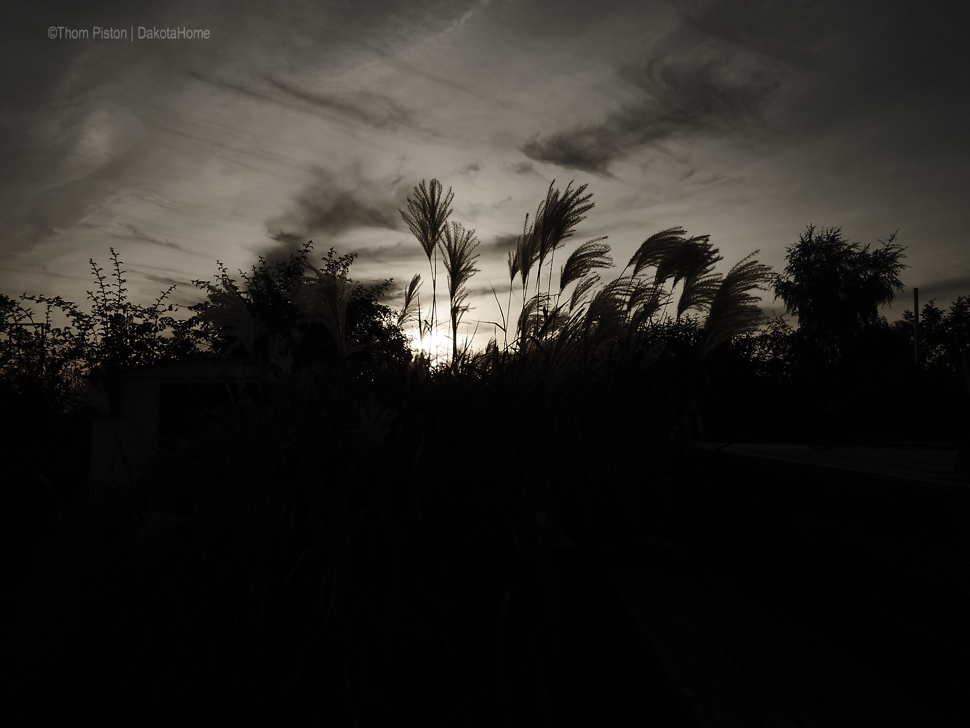 Schilf mit Sonnenuntergang, mitte September, Dakota Home