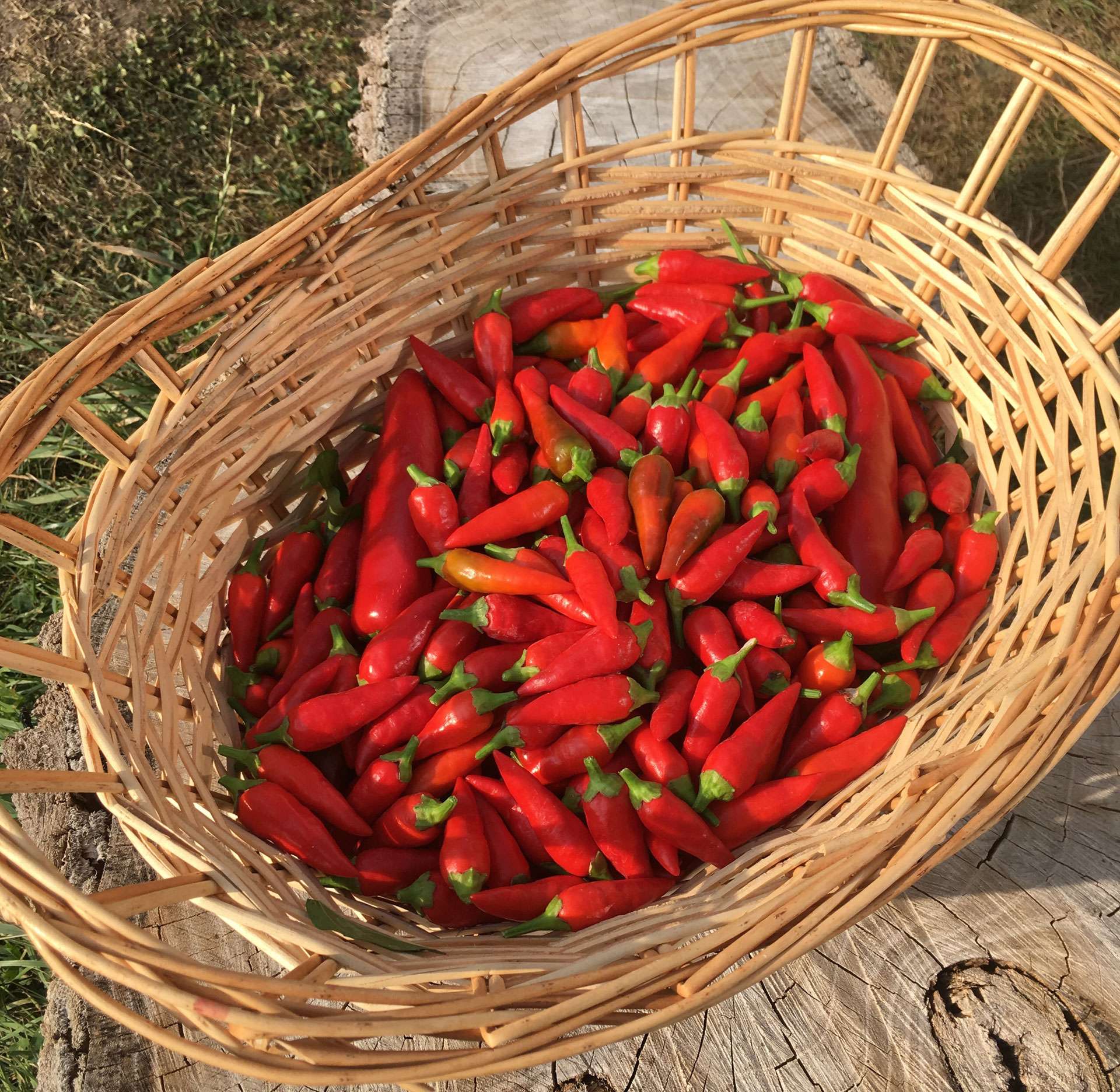 Chilis at Dakota Home