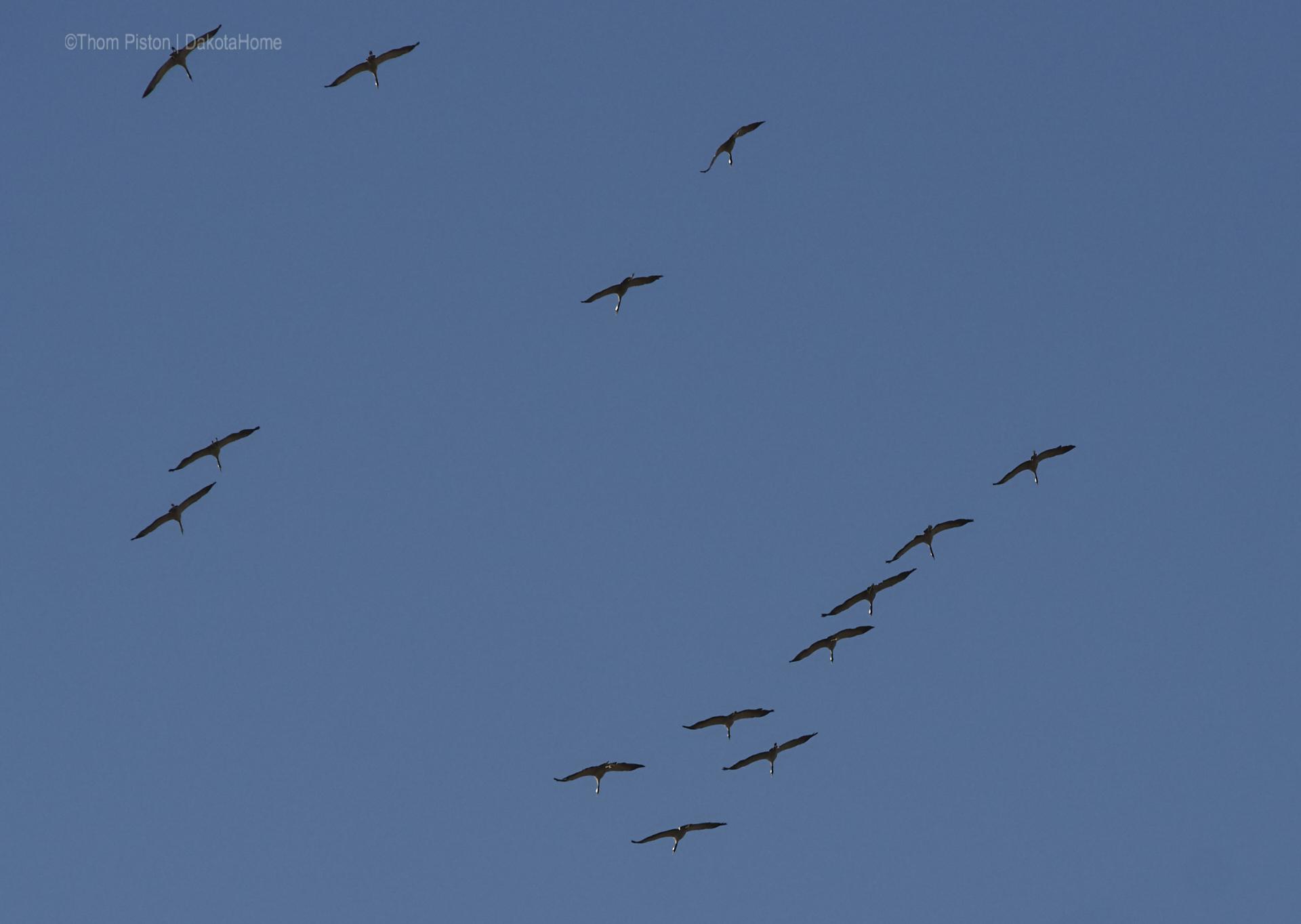...die Vögel sammeln sich um uns im Winter allein zu lassen...