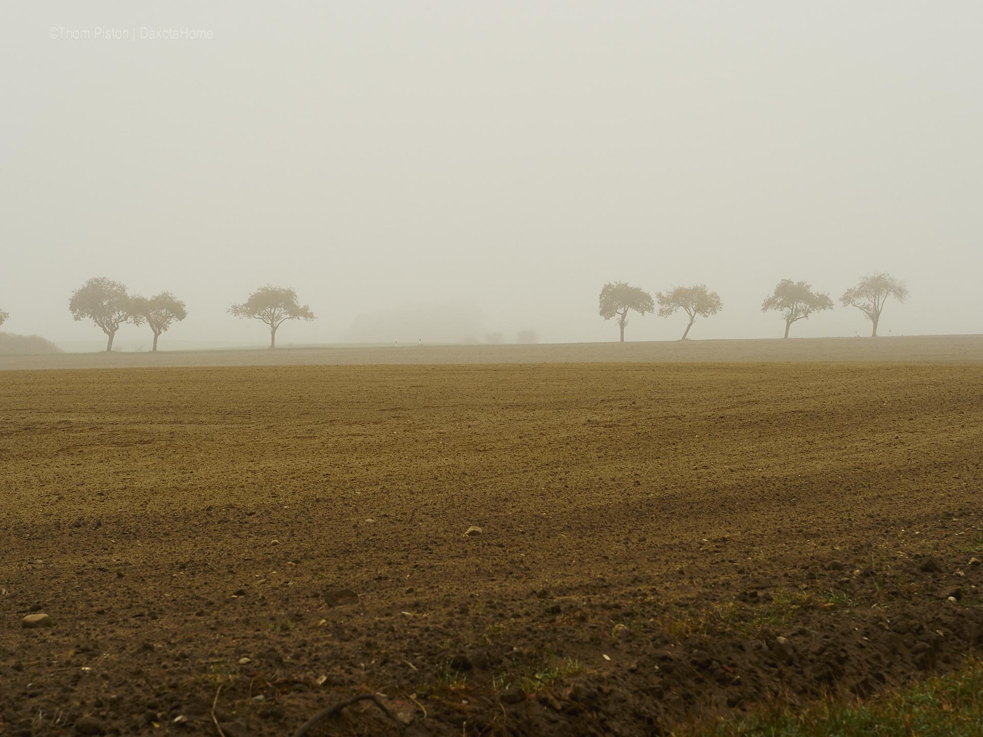 Mitte November, Nebel in Brandenburg