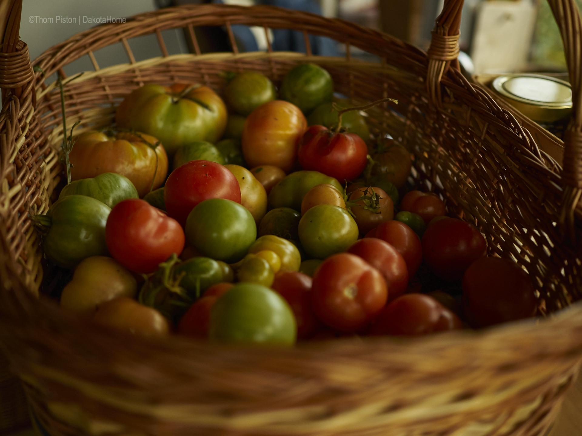 die letzten Tomaten at Dakota Home, 2018