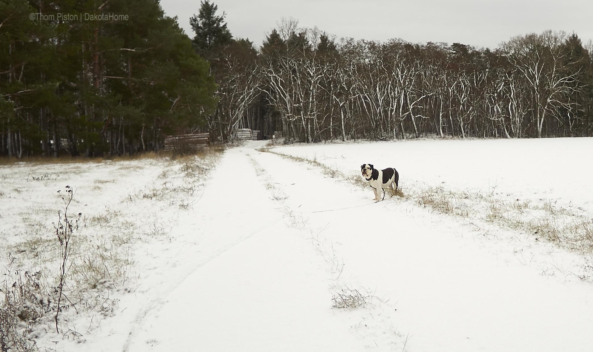 Nass, Kalt, Schnee, Wind am Tiny house