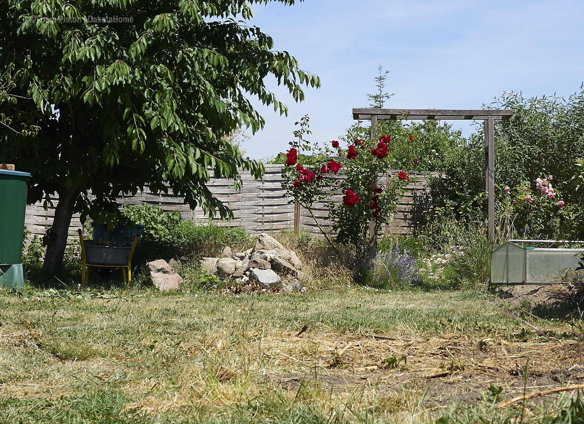 ...die Rosen an der Ponderosa..ein Traum