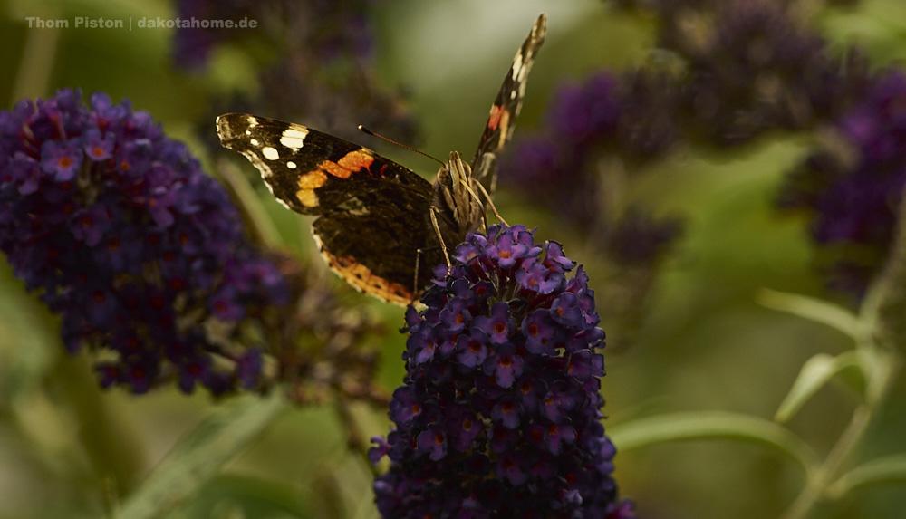 Heisser Juli in Brandenburg mit Bienen, Schmetterlingen, Schlangen und natürlich der Bulldogge