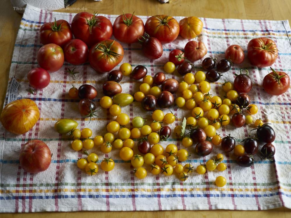 verschiedenste Sorten Tomaten...