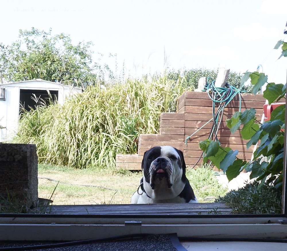 die Old British Bulldog kann langsam Zuccini nicht mehr sehen..huaaa