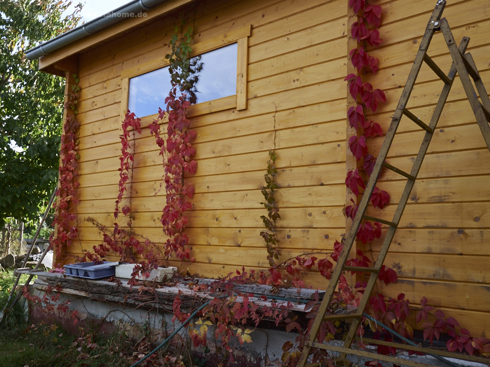 Sonne , Regen & grossartige Herbstfarben am Dakota Home – Okt. 2019