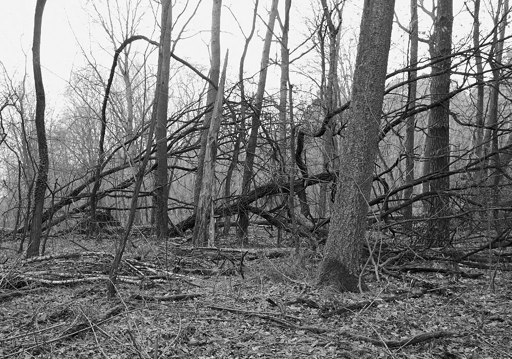umgefallene Bäume in einem Brandenburger Wald