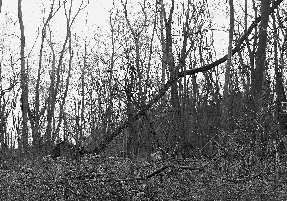 sterben die Bäume?