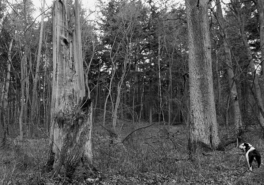 Tod der Bäume