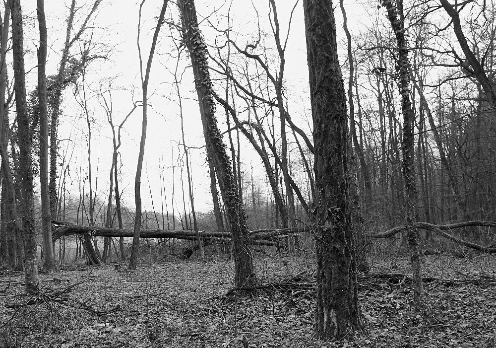 umgefallene Bäume