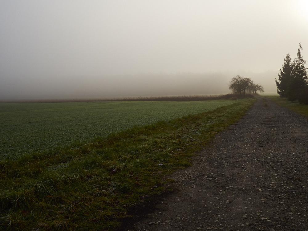 Nebel Romantik in Brandenburg