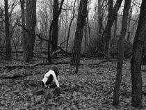 Alwin's Wald fällt um,