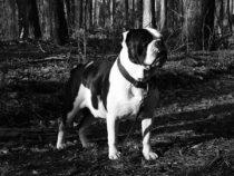 Januar 2020, dunkle, kurze Tage & die Bulldogge ist sehr krank