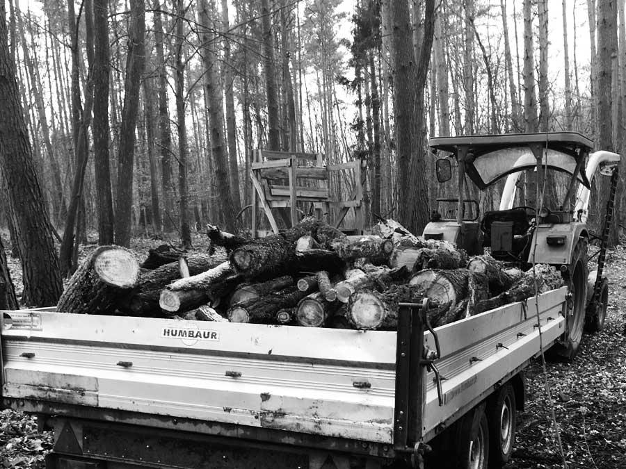Kamin Holz aus dem Wald selber holen macht zwar Arbeit ist jedoch wesentlich günstiger als zu kaufen
