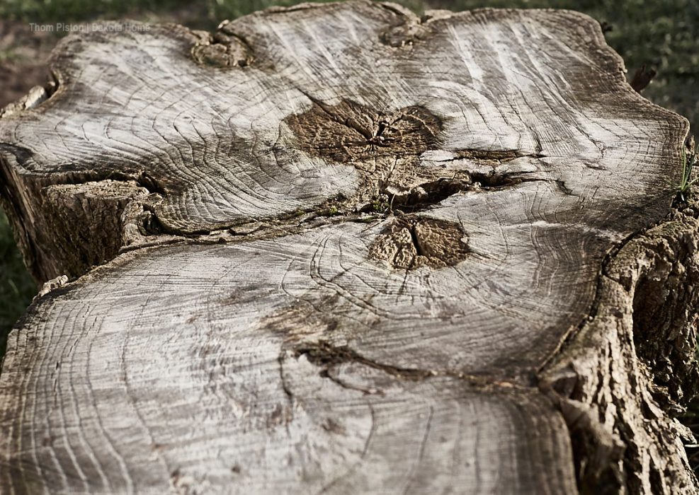 Holz am Dakota Home, März 2020