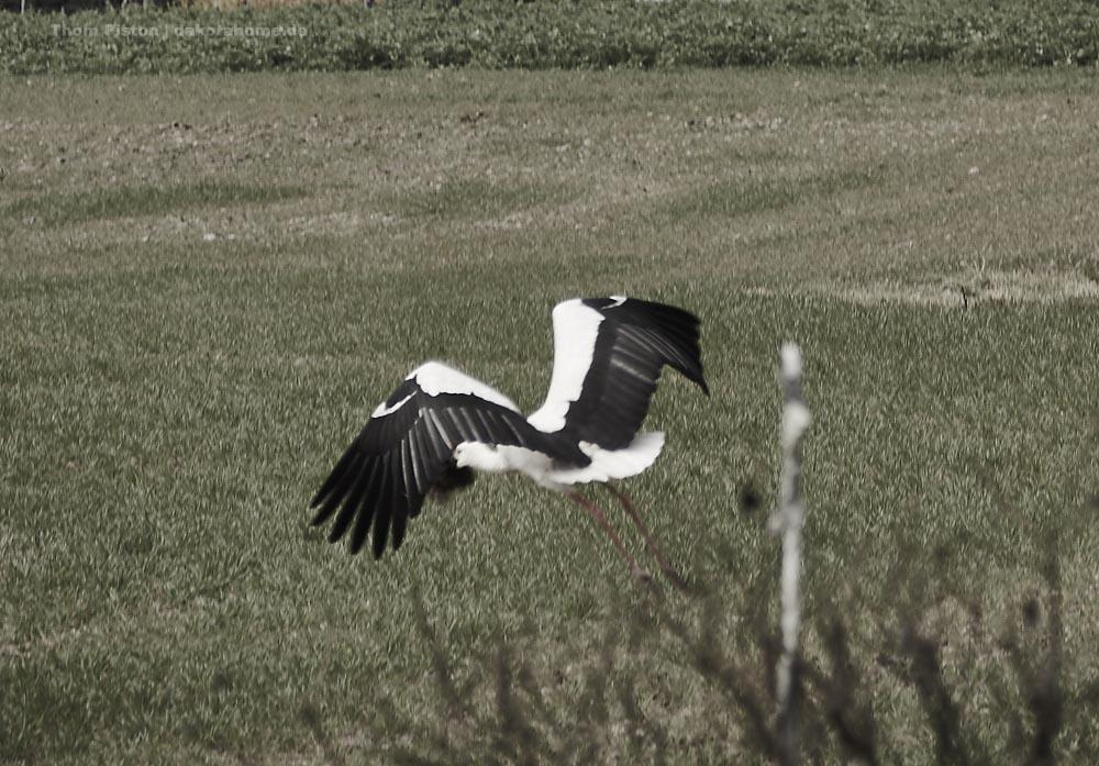 Der Storch voll beladen