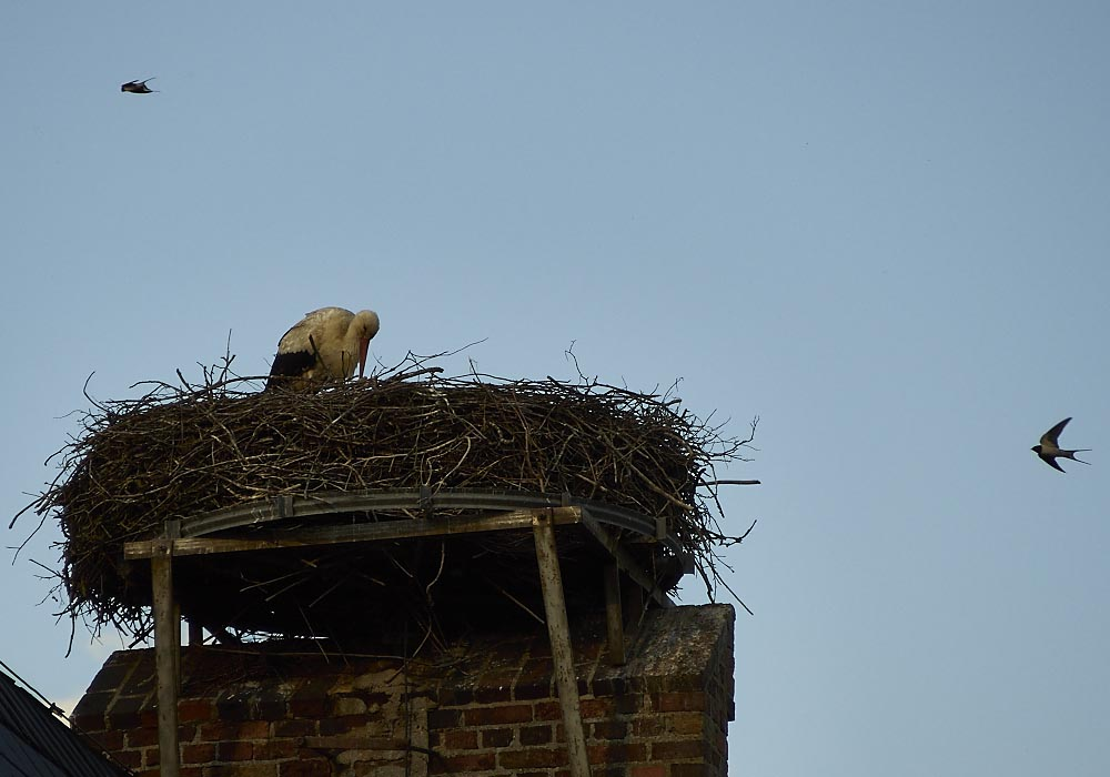 Storch in Briesen