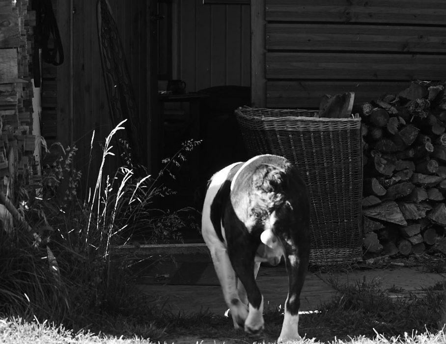 Anfang Juni und die Bulldogge geht lieber mal ins wohltemperierte Haus