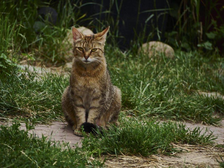 Katzen müssen hier Mutig sein..Alwin mag die nicht