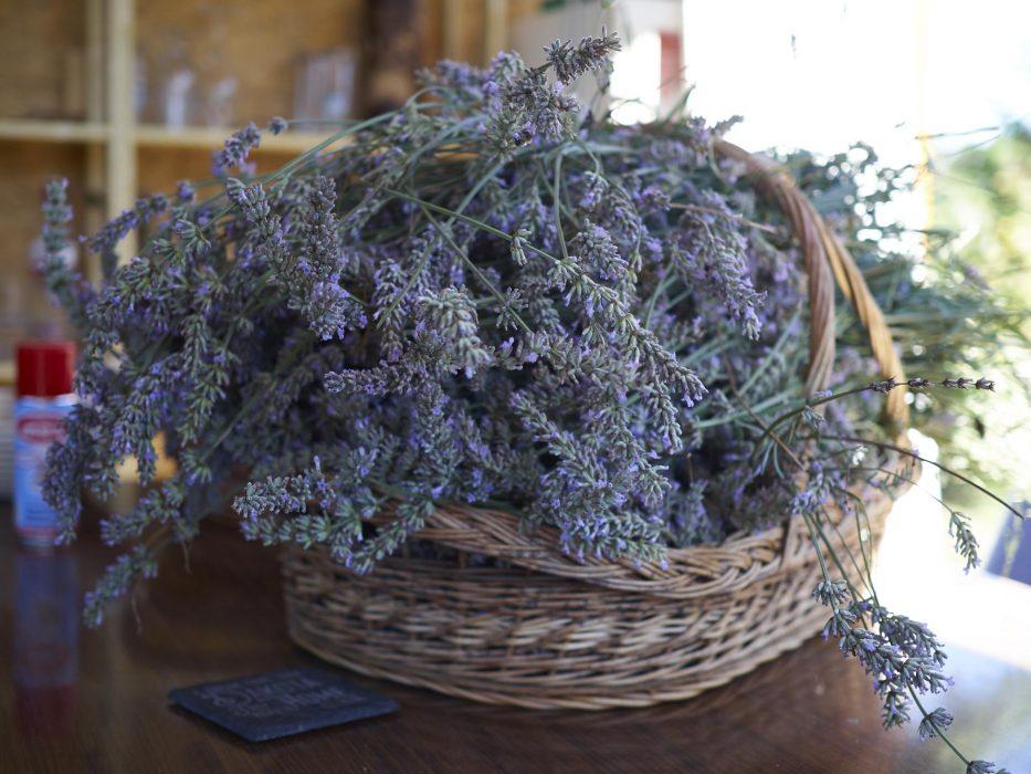 Lavendel Ernte